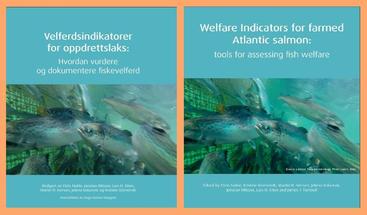 Talking our language: welfare indicators handbook now available in English