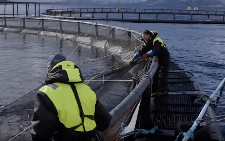 Vil ha flere innovative bedrifter fra havbruksnæringen
