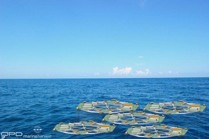 Mowi obtuvo dos permisos para proyecto Marine Donut