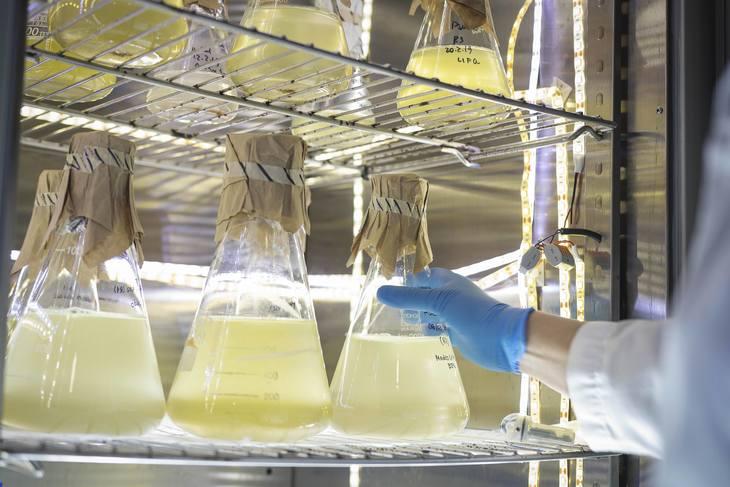 Desarrollan aditivo para proteger al salmón ante floraciones de microalgas