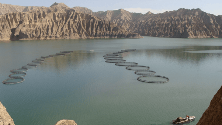 BioMar to supply greener feed to Chinese trout grower