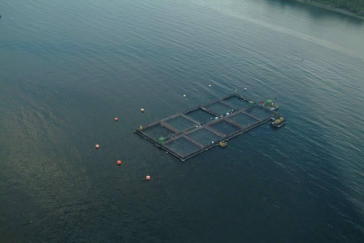 Informe sanitario 2018: Salmonicultura sigue progresando