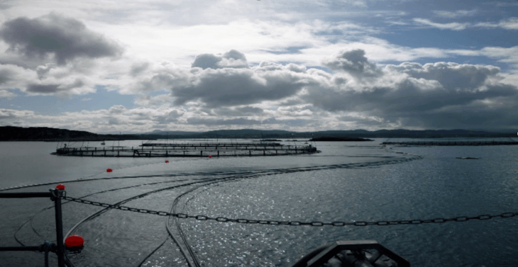 Proveedores buscan mejorar eficiencia en alimentación de peces