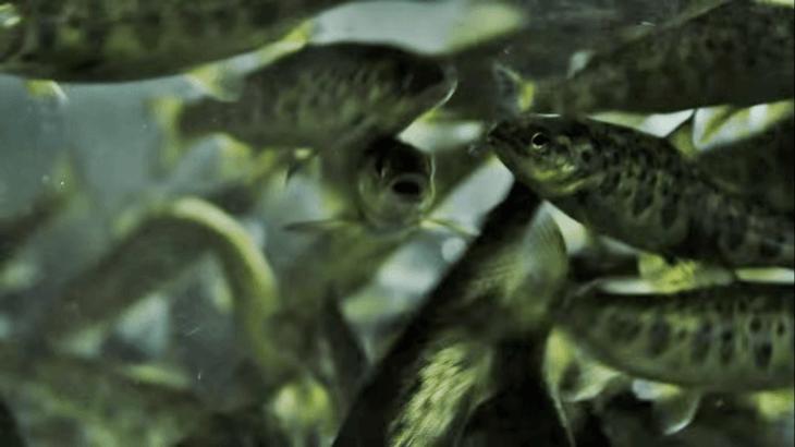 En Chile: Cooke Aquaculture tendrá nueva piscicultura de recirculación