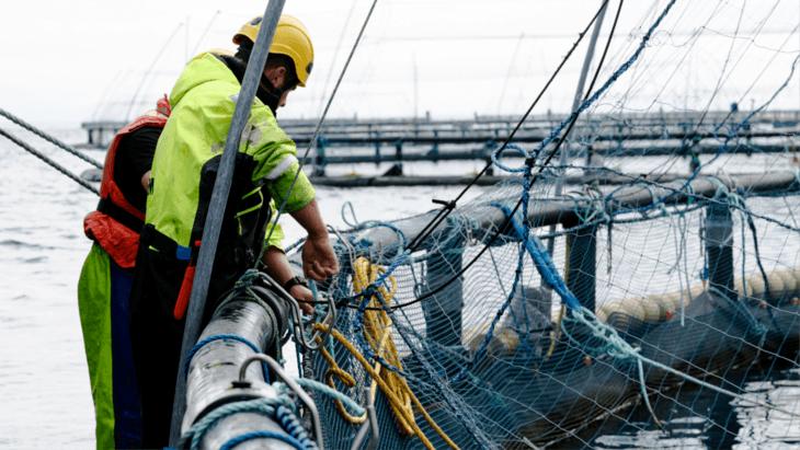 Holyrood probes lockdown impact on aquaculture