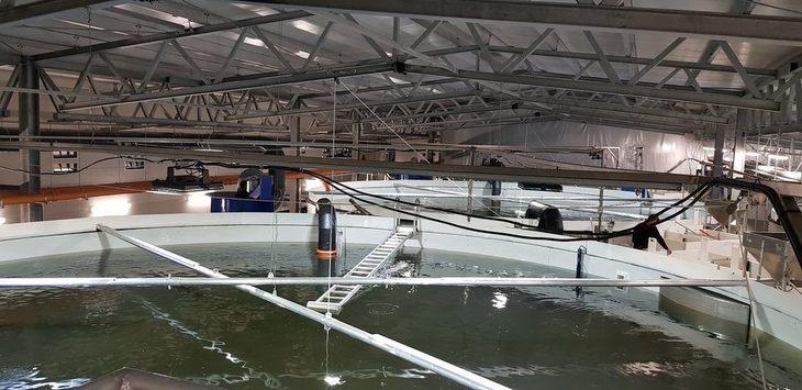 Prevén que proyectos RAS representarán el 25% de la producción de salmón