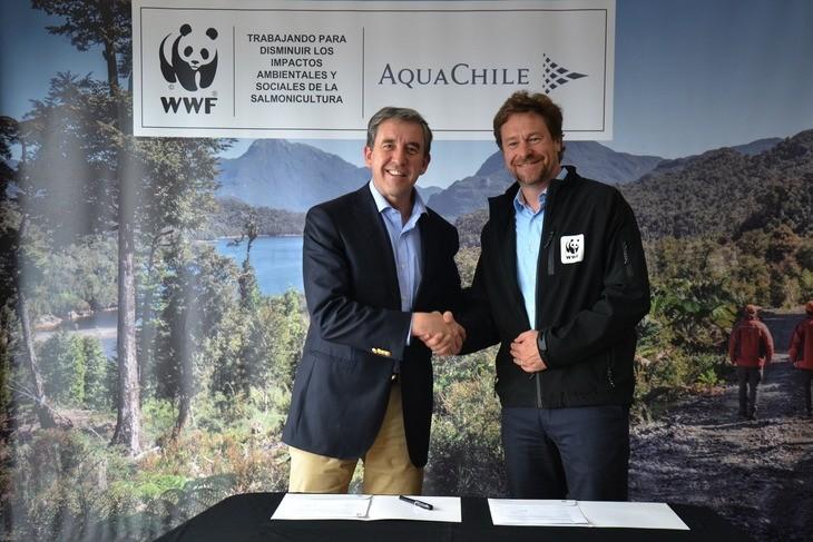 AquaChile acuerda con WWF reducir sus impactos ambientales y sociales