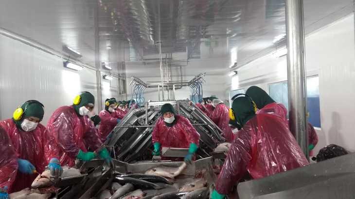 El acuerdo que permitió retomar la actividad en plantas salmonicultoras