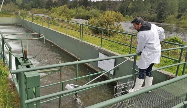 SMA fiscaliza pisciculturas de la región de Los Ríos