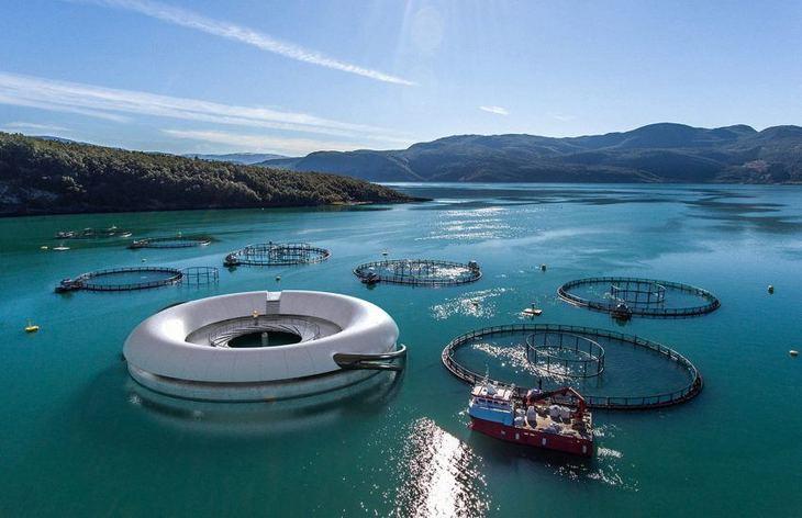 Ingen tillatelser til Wenberg Fiskeoppdrett