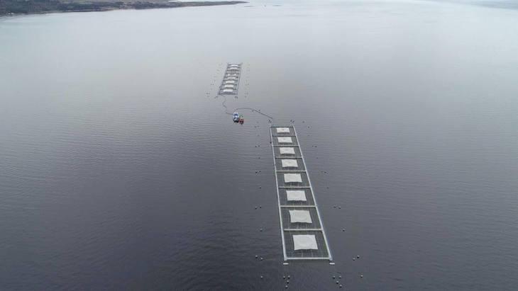 Blumar prevé producir casi 75 mil toneladas de salmón en el 2022