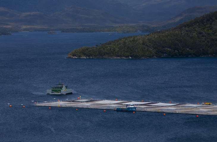 Blumar certificará ASC sus primeros centros en Aysén y Magallanes