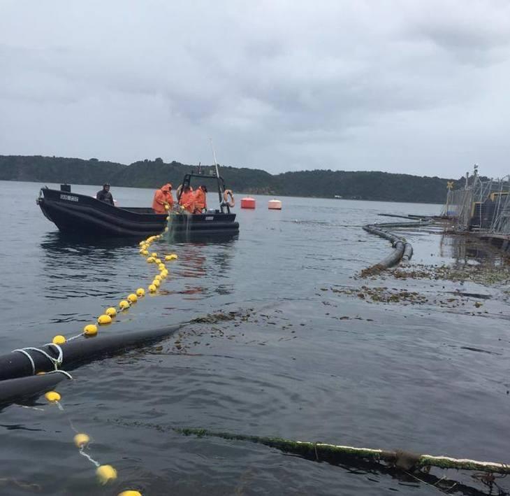 Investigan causas del escape masivo de salmones de Cermaq Chile