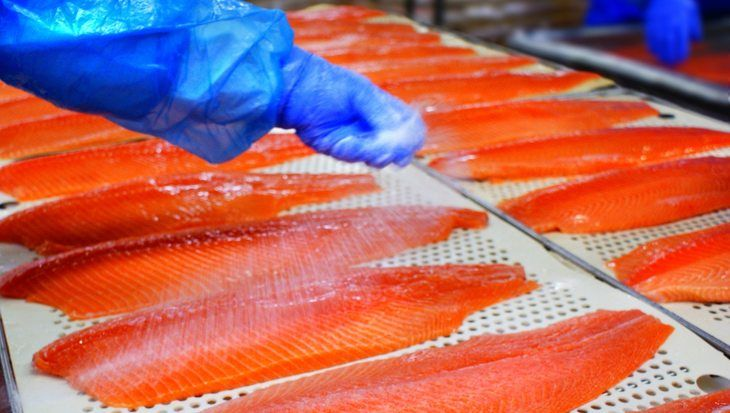 Salmon processors facing up to immigration crackdown