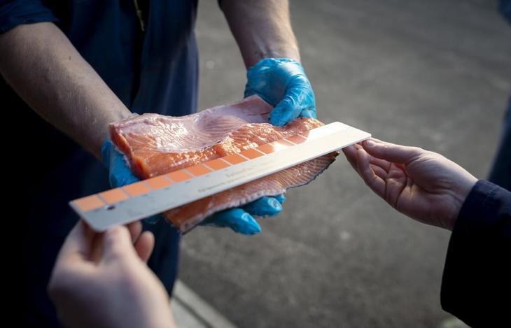 Noruega: Pronto saldrá a la venta primer salmón cultivado en RAS