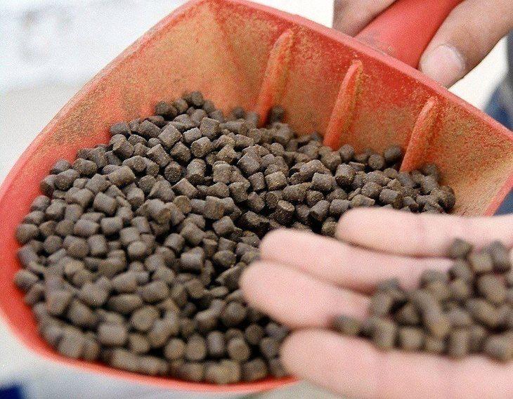 Noruega: Biomar tendrá que pagar US$ 2,4 millones en caso de patentes
