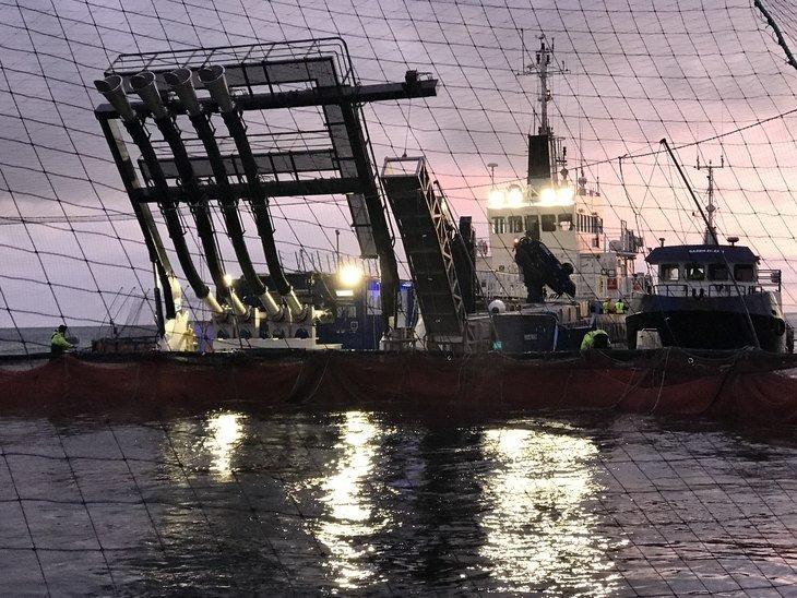 Hydrolicer: Smir organiza viaje a Escocia con salmonicultoras chilenas