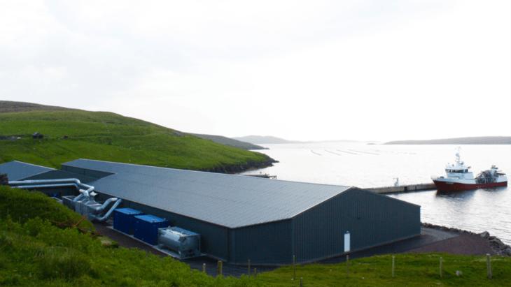 Grieg Shetland probes blaze that killed 200,000 parr