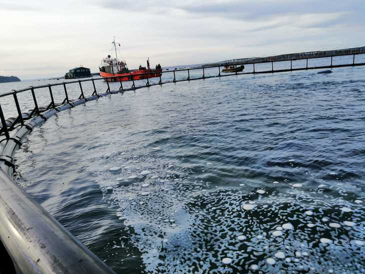 Restricciones logísticas en Chiloé marcan desarrollo de proyecto de acuicultura oceánica