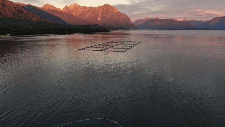 Salmones Camanchaca explica cómo calculó peces escapados en centro de Chaitén