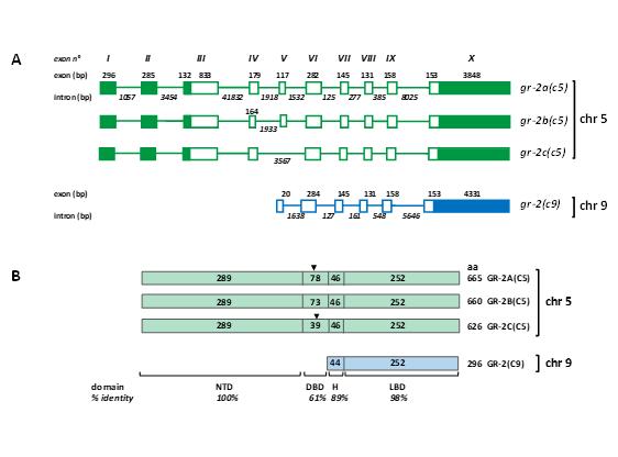 Describen nuevos genes del receptor de glucocorticoides en salmón del Atlántico