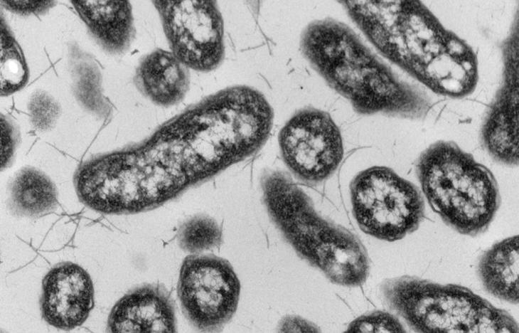 La biorremediación podría controlar y eliminar metales en la salmonicultura