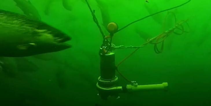 Vard trae a Chile nuevo sistema de nanoburbujas para oxigenación de peces