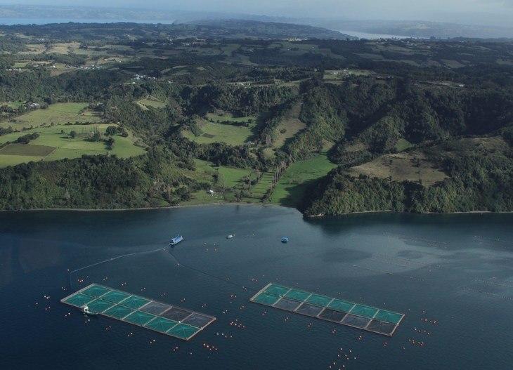 Gremio salmonicultor se une a organización internacional de acuicultura sustentable