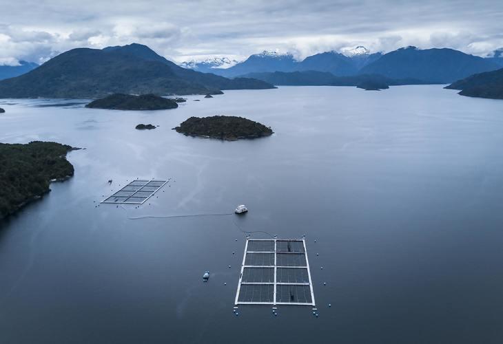 Ventisqueros certificará este año 80% de su biomasa de salmón bajo estándar ASC
