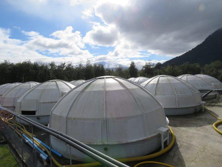 Salmones Camanchaca realiza pruebas para incrementar tamaño de sus smolts