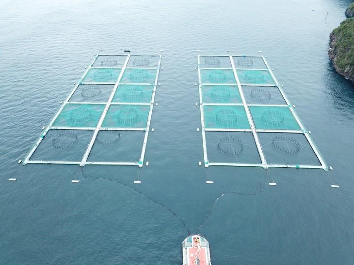 Las innovaciones que buscan mayor seguridad para centros de salmón
