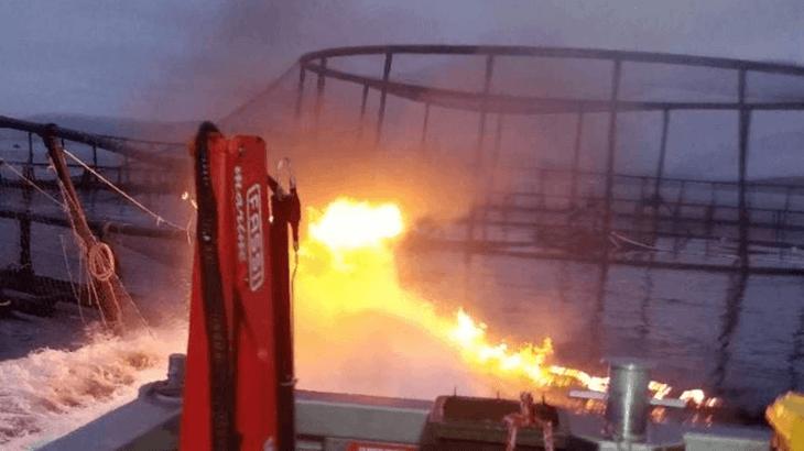 50,000 salmon escape after Tasmanian cage blaze