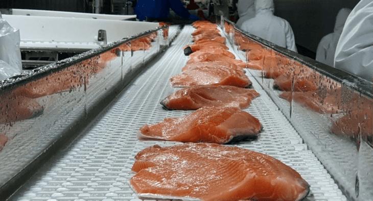 Salmones Camanchaca procesará toda su producción para valor agregado