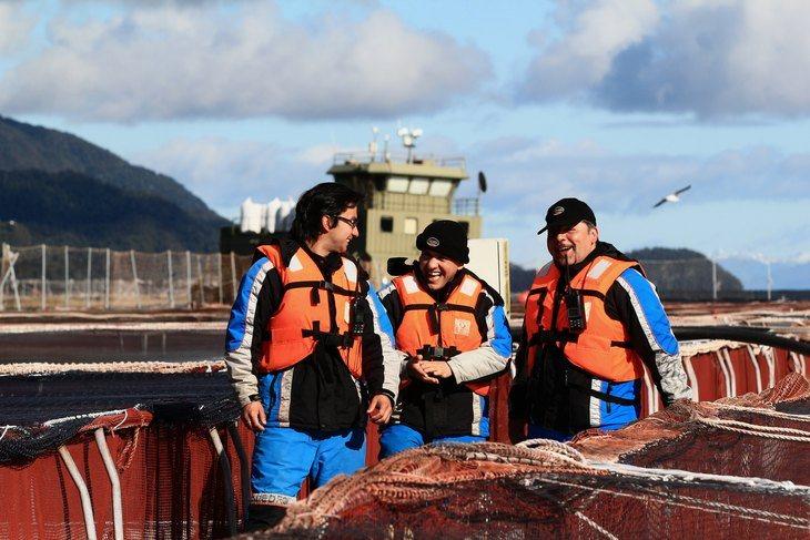 ¿Cuál es el impacto económico de la salmonicultura chilena en regiones?