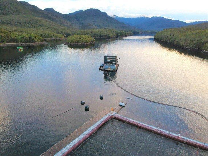Cargill destaca resultados obtenidos por Australis en producción de salmón Atlántico