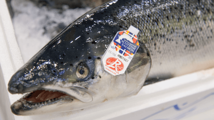 Brexit costs Scottish salmon farmers £11m in two months