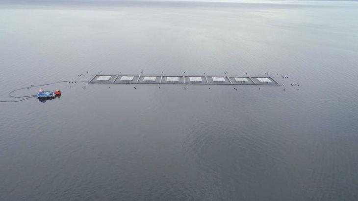Blumar compromete certificación ASC para 60% de sus centros de salmón