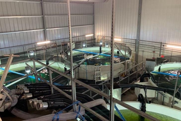 Atlantic Sapphire realiza cambios en equipo directivo tras mortalidad de peces