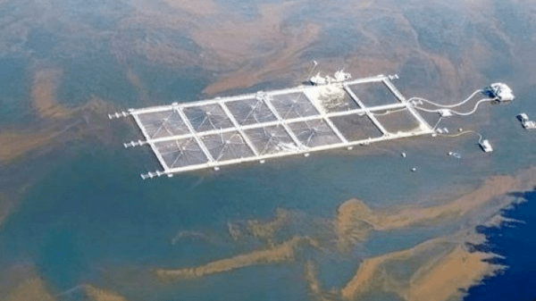 5.4m fish moved out of harm's way in Chile