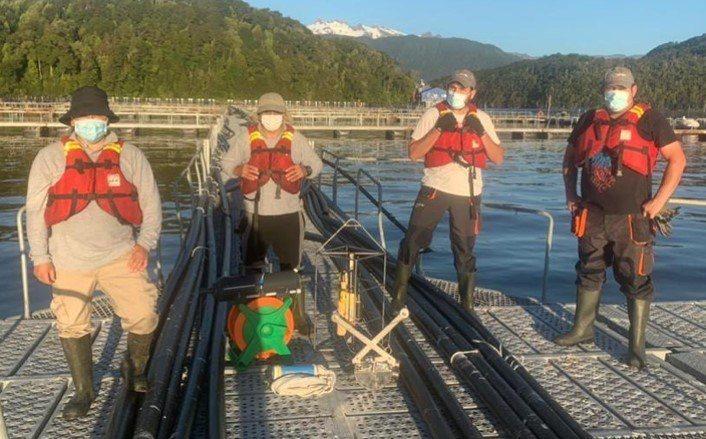 Inédito cultivo de salmones y algas en una misma concesión iniciaría en mayo