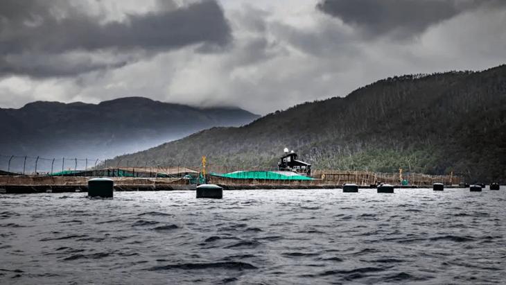 Expedición National Geographic muestra preocupación por salmonicultura en Magallanes