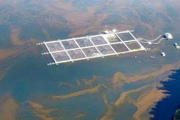 Informe ONU: Acuicultura estaría vinculada con proliferación de algas nocivas