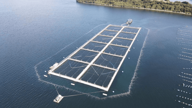 Irish farms to test Chilean algal bloom bubble barrier