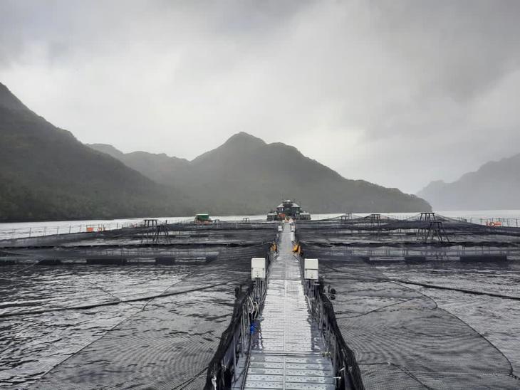 Nova Austral admite que sus niveles actuales de costos no son sostenibles