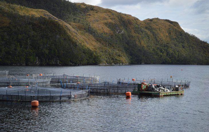 Salmonicultores expresan rechazo y molestia por irregularidades de Nova Austral