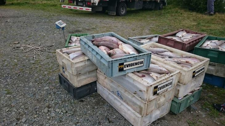 Prisión preventiva para sujetos acusados de robo a camiones con salmón