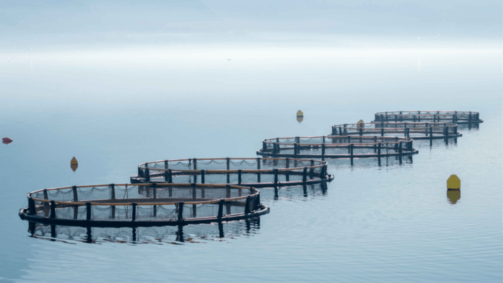 Making fish farm impact modelling more accurate