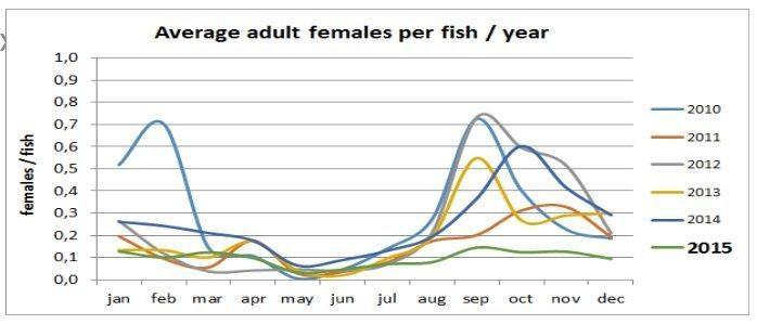 Lusenivå i Marine Harvest siste år. (klikk for større)