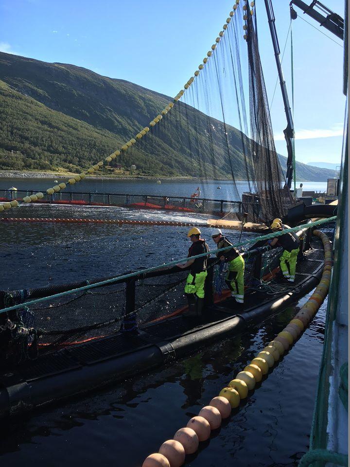 Grieg Seafood Finnmarks første Thermolicer-avlusing gikk vellykket. Foto: GSF