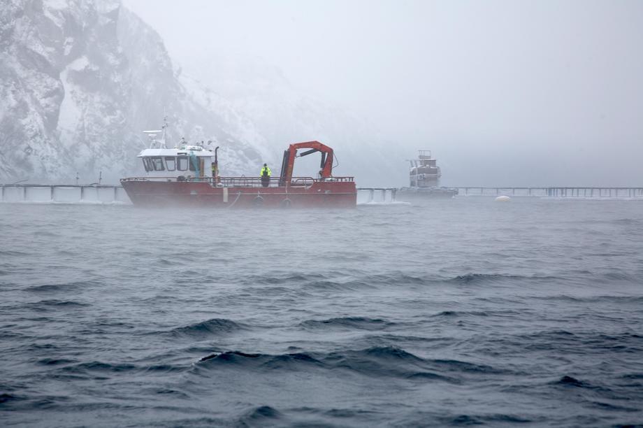 Kalde forhold i Finnmark. Foto: Smøla Klekkeri og Settefisk.